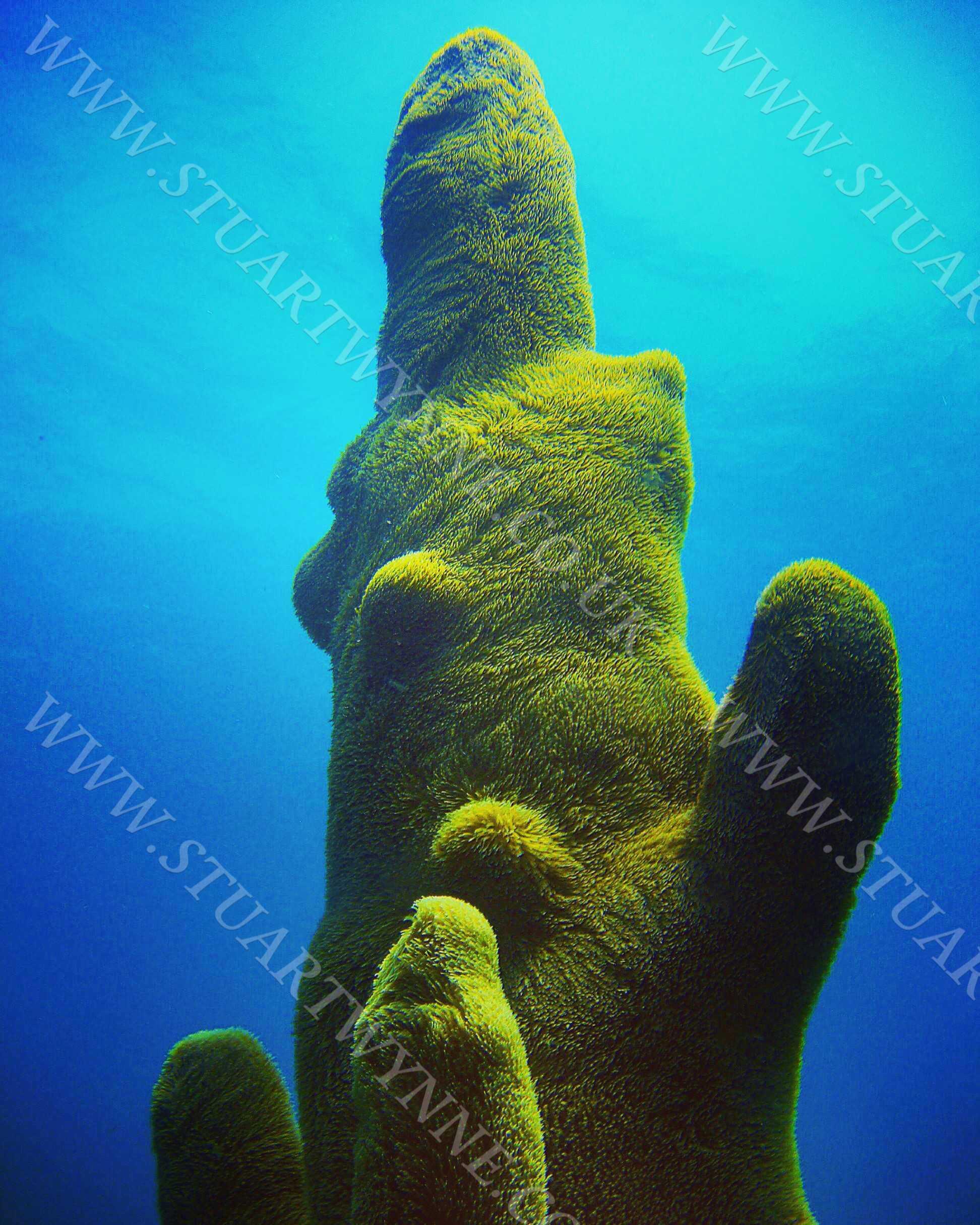 Pillar Coral Anguilla