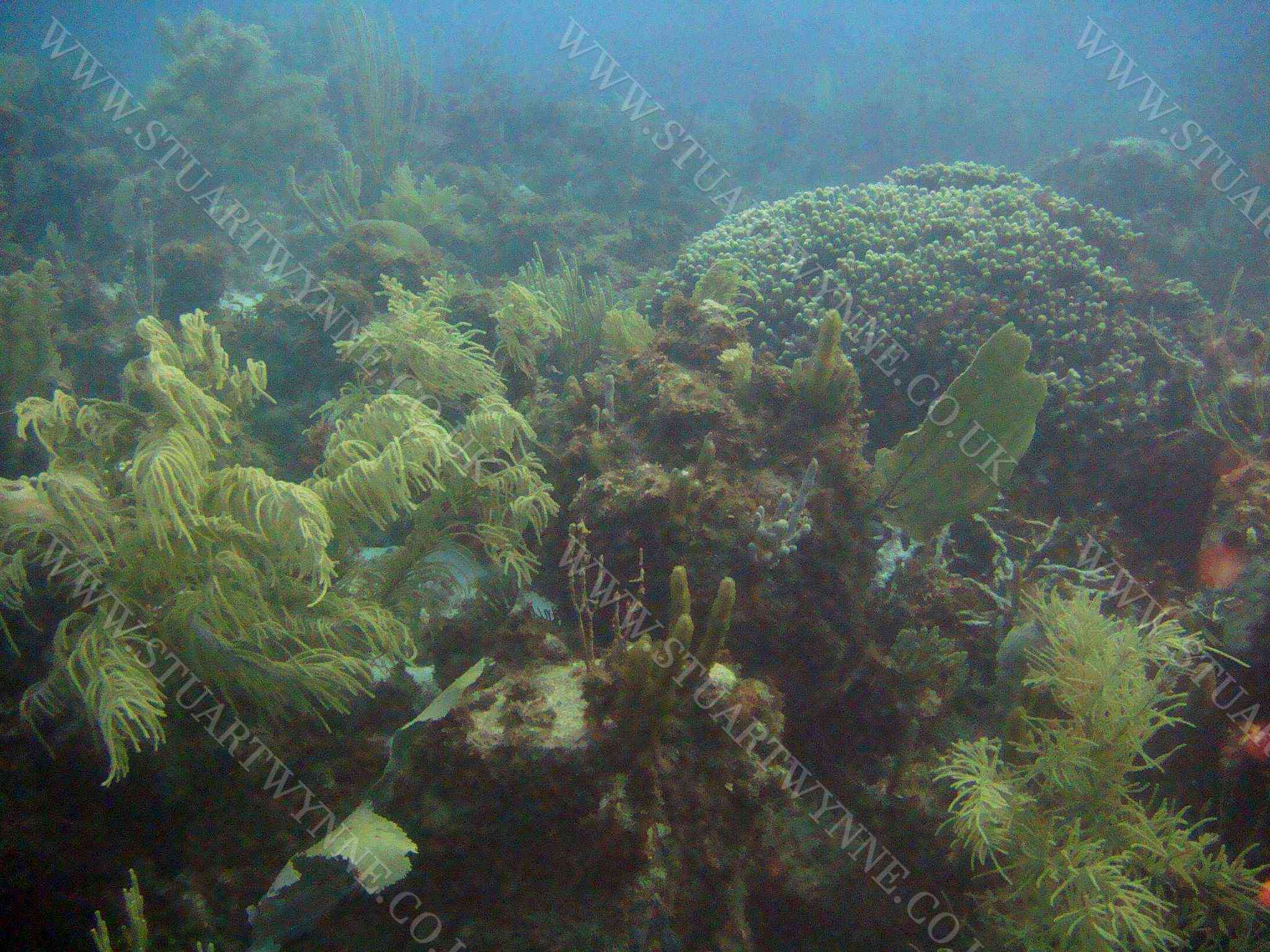 Mixed Reef Shoal Bay East Anguilla 2007