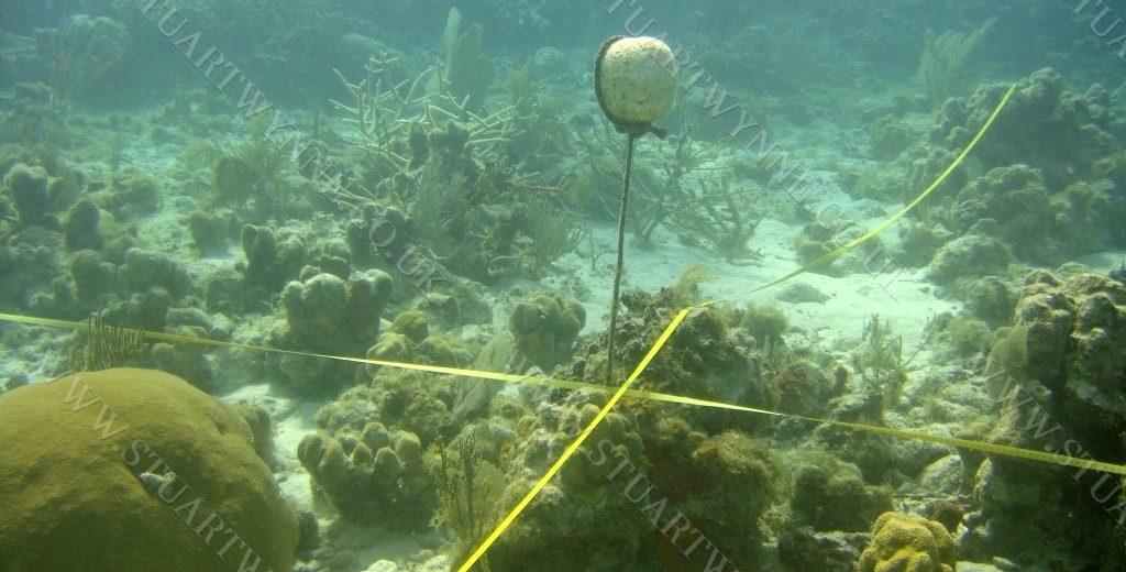 Sandy Island Monitoring Anguilla 2008