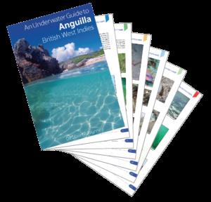 An Underwater Guide to Anguilla British West Indies